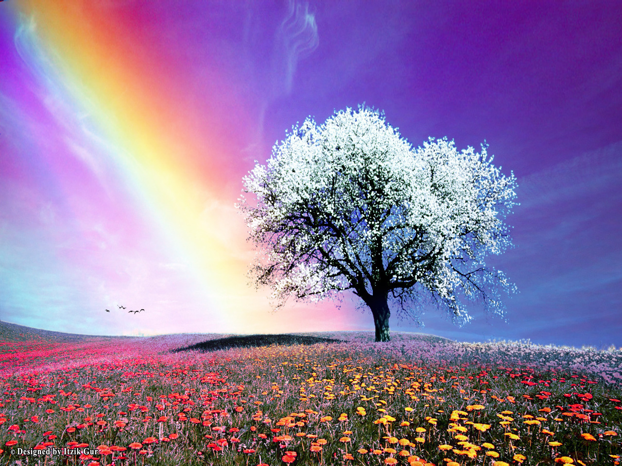 Bright colors images rainbow hd wallpaper and background for Bright wallpaper