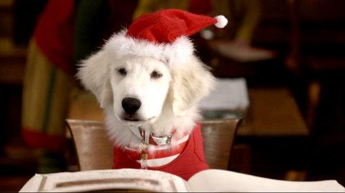 Santa Buddies Pictures :D!!!!