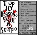Scorpio  - astrology photo