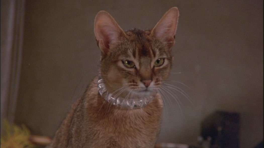 The-Cat-From-Outer-Space-classic-disney-