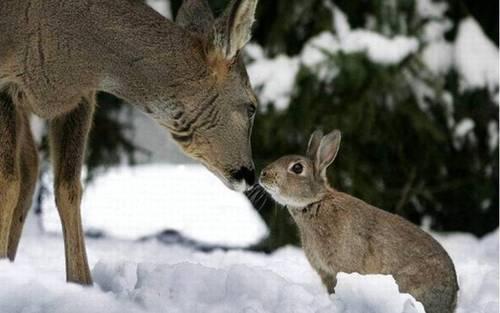 The Magic of Nature