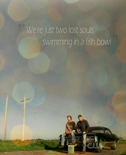 We're just two Lost souls swimming in a ikan bowl