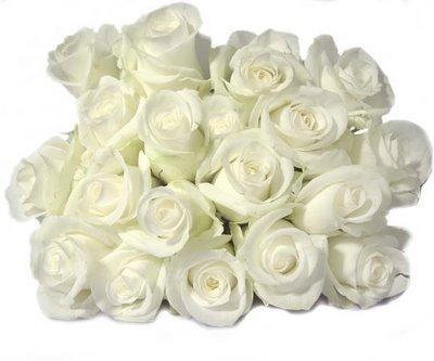 White mawar