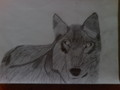Wolf ball point drawing