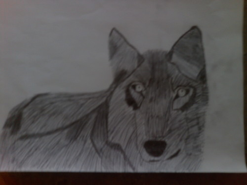 serigala, wolf ball point drawing