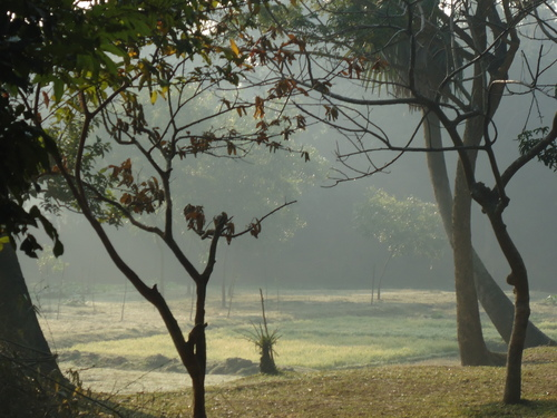 bangladesh....................in winter (morning)