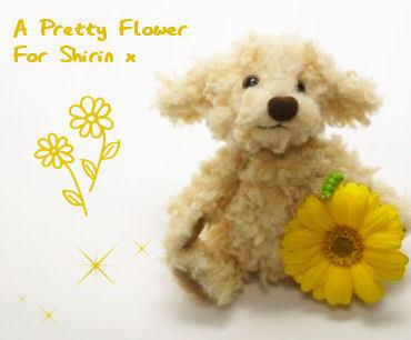 A Pretty ফুল For Shirin x