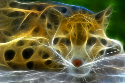 Clouded Leopard Fracted
