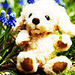 Cute Teddybear ❤  - teddybear64 icon