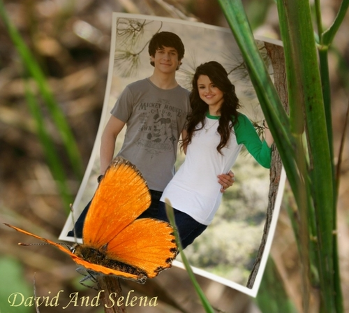 Dalena (butterfly)
