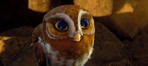 Gylfie the Elf Owl