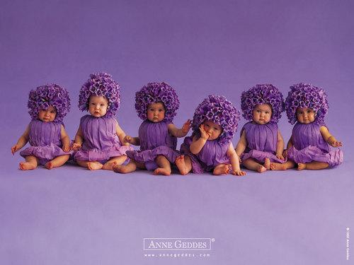 Purple malaikat