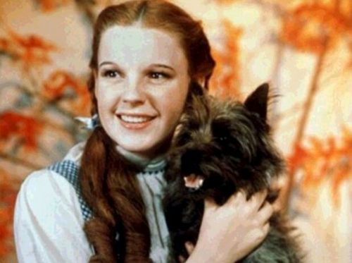 The Beautiful Dorothy Gale