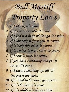 The Bullmastiff Property Laws :)