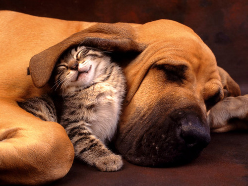 even though we are different we can still cuddel and love each other