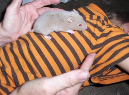 jonathans new pet