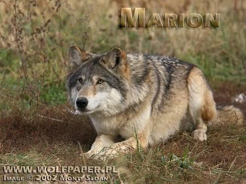 wolf Bilder