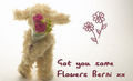 Got you some flowers Berni :) - yorkshire_rose photo