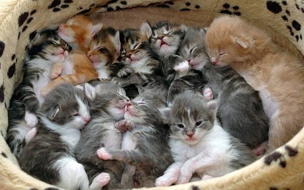बिल्ली के बच्चे ~ बिल्ली