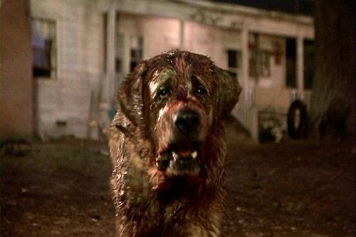 Stephen King achtergrond entitled cujo movie pic