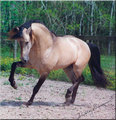 spirit the mustang - spirit-stallion-of-the-cimarron photo
