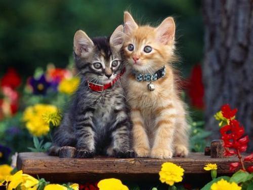Beautiful Friends