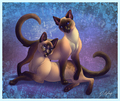 Beautiful Siamese - siamese-cats fan art
