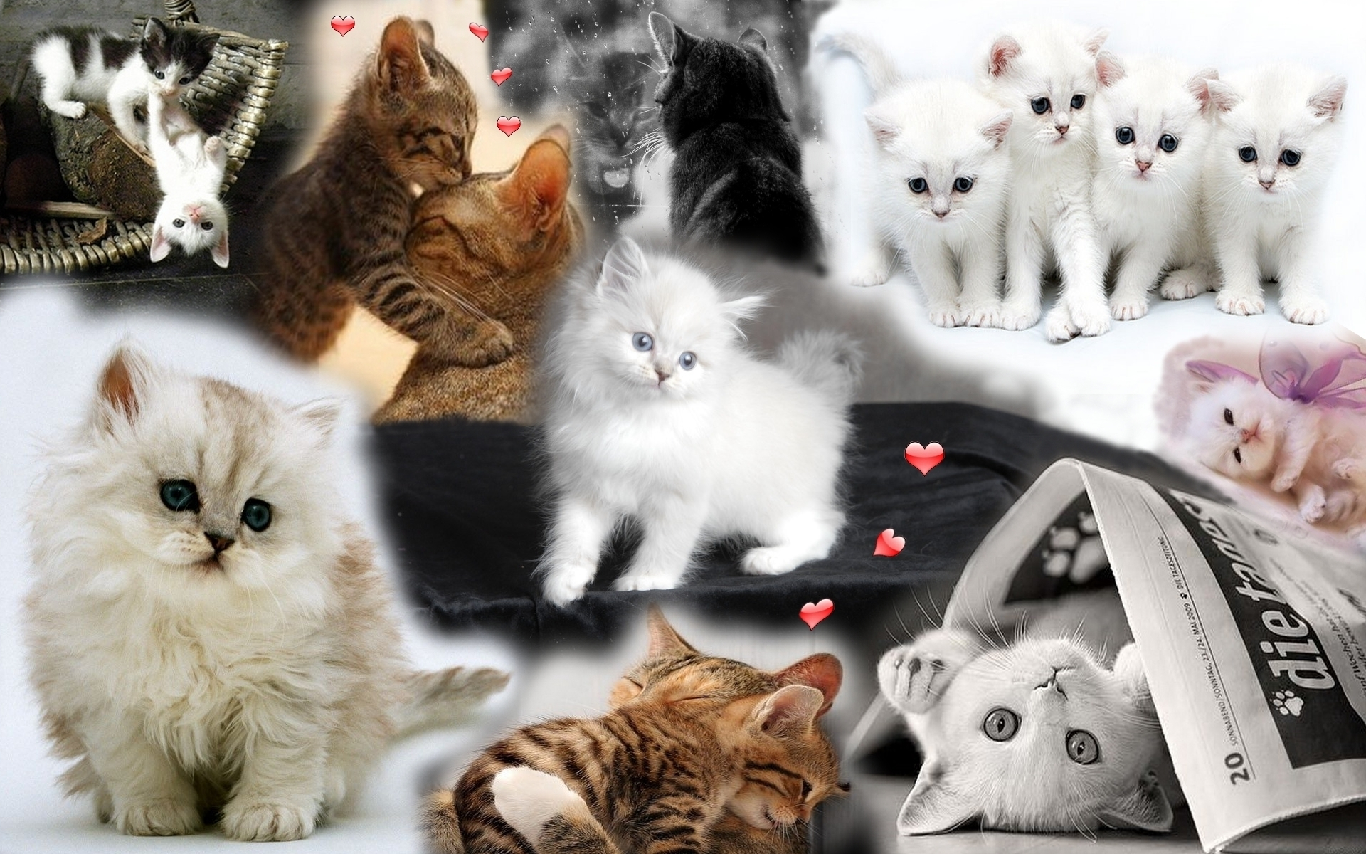 cute kittens images cute kitten hd wallpaper and