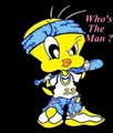 Gangsta tweety - tweety-bird photo