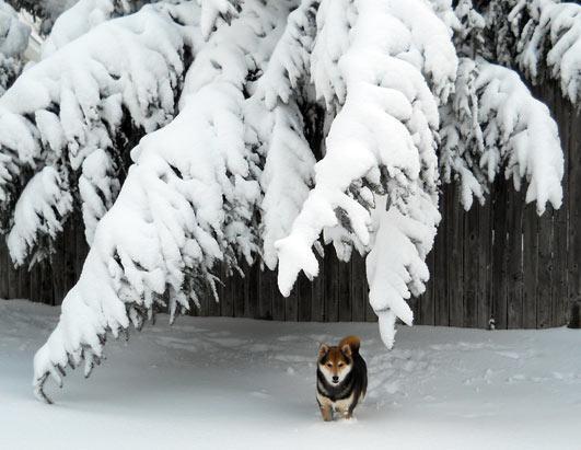 snow hellip god will be - photo #32