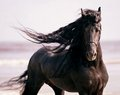 I Just Liebe Horses!