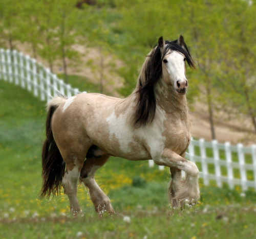 I Just upendo Horses!