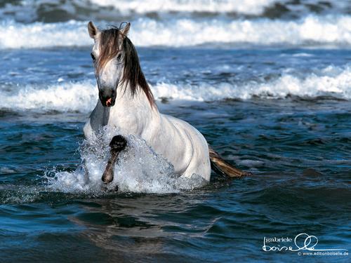 I Just 爱情 Horses!