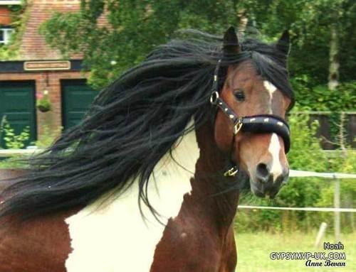 I Just tình yêu Horses!
