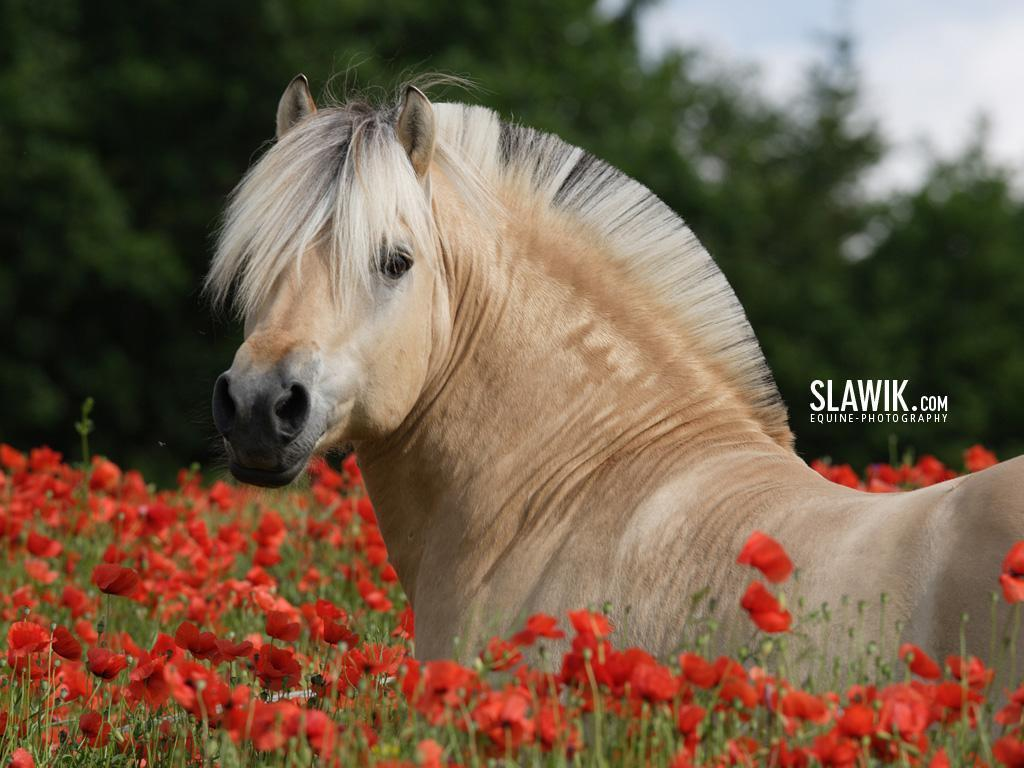 i horse