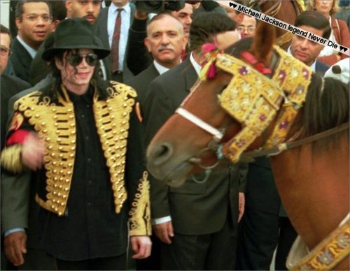 Michael and animali