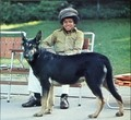 Michael and animals - michael-jackson photo