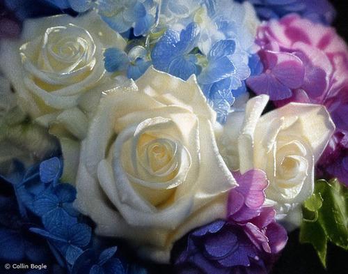 Pretty Ros
