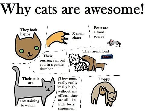 Why Кошки are awesome.