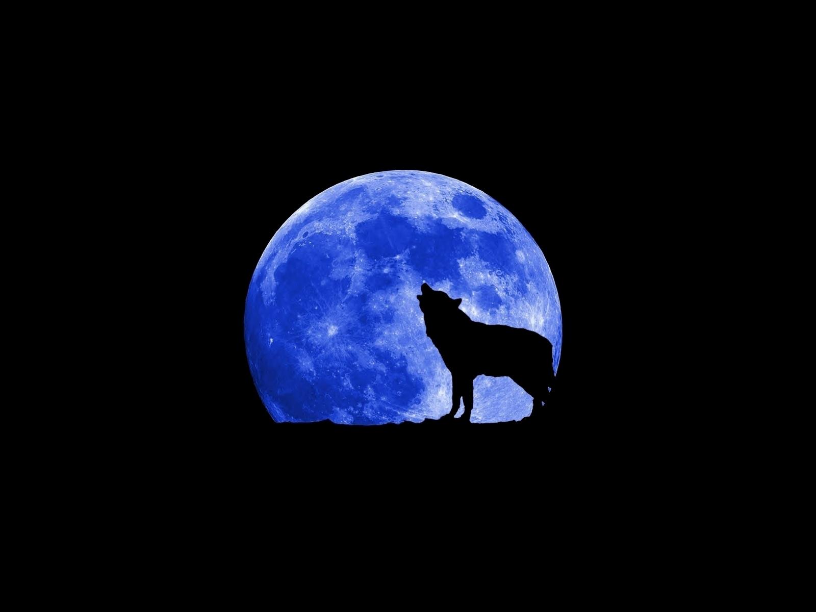 blue moon wolf wallpaper - photo #14