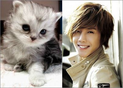 Kim Hyun Joong wallpaper probably containing a kitten, a cat, and a tom titled ♥Hyun Joong♥