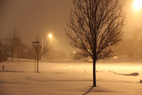 Winter fond d'écran with a live oak, a beech, and a california white oak called A Beautiful Night