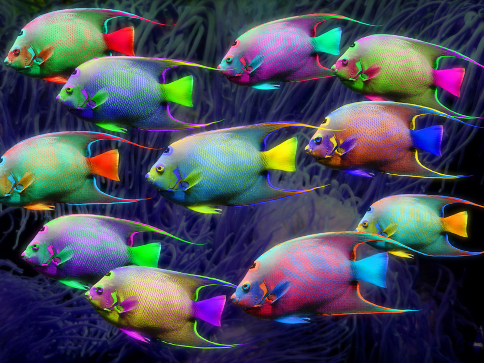 Neon colors rock images fish hd wallpaper and background for What color are fish