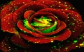 Glowing Color - roses wallpaper