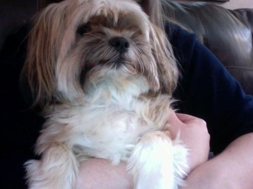 My dog Mika. :)