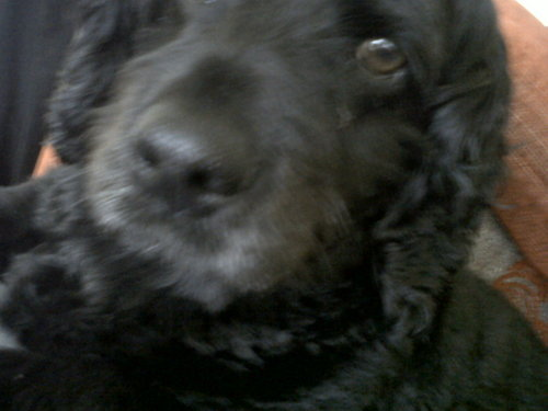 My dog Ruby!