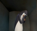 Poor Kowalski! D: