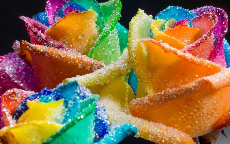Rainbow roses roses image 18998696 fanpop for Rainbow rose wallpaper