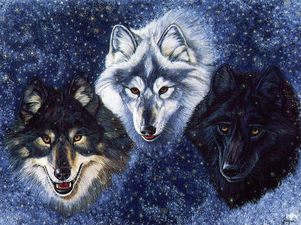 wolf wallpaper yorkshire - photo #13