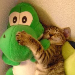 Yoshi Luv Kitty